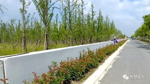 长江泰兴段,一条生态绿色廊道,静静等待四方跑友
